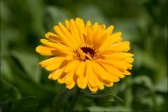 orangeriet-20140717-035