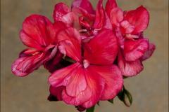 irene-salomon-20120718-033