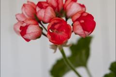 red-pandora-20120728-004