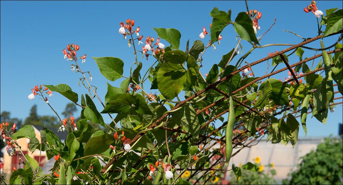 orangeriet-20140905-069