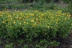 orangeriet-20180825-022