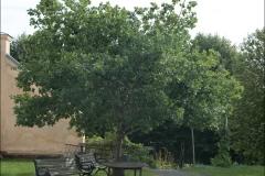 orangeriet-20180825-044