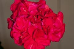 marbacka-rod-20120717-052