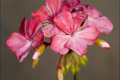 mrs-quilter-20120718-012