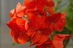 orange-splash-01