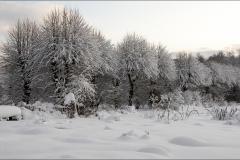 orangeriet-20121223-002